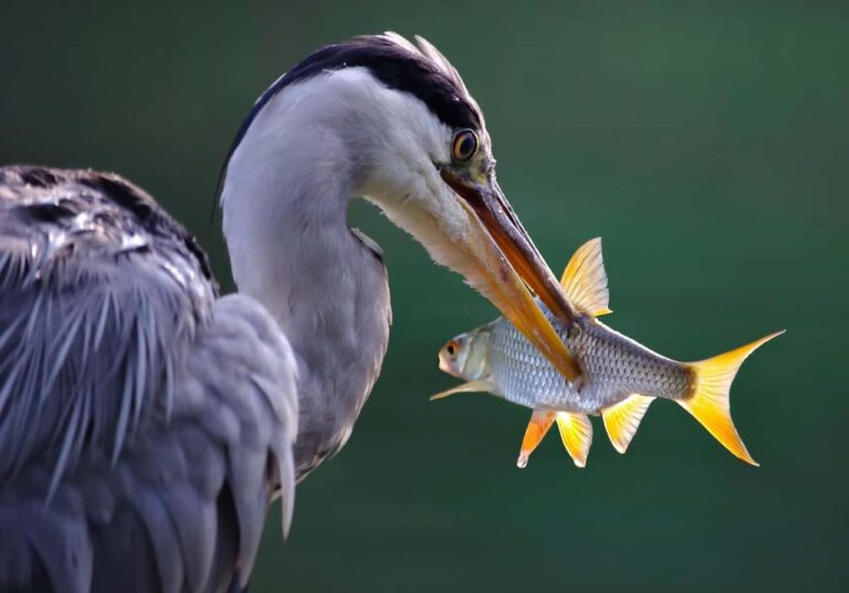 Fauna i flora Rybnika